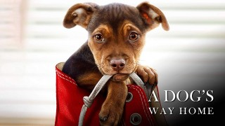 A Dog's Way Home (2019) Full Movie - HD 1080p
