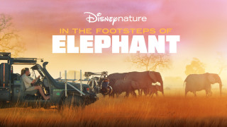 In the Footsteps of Elephant (2020) Full Movie - HD 720p
