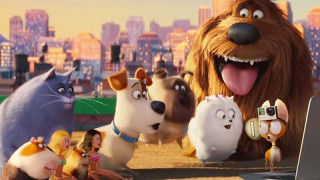 The Secret Life of Pets (2016) Full Movie - HD 720p BluRay