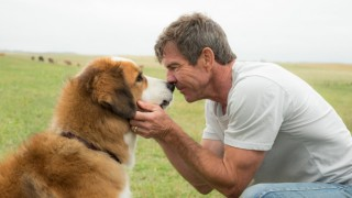 a dogs journey (2019) Full Movie - HD 1080p